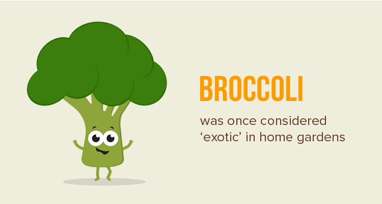 fun facts about food - broccoli