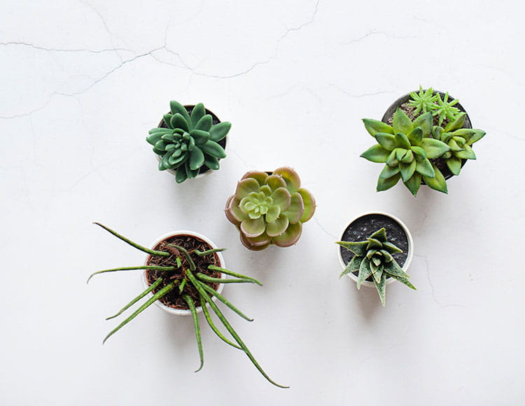 mental health in the office - office plants increase happiness